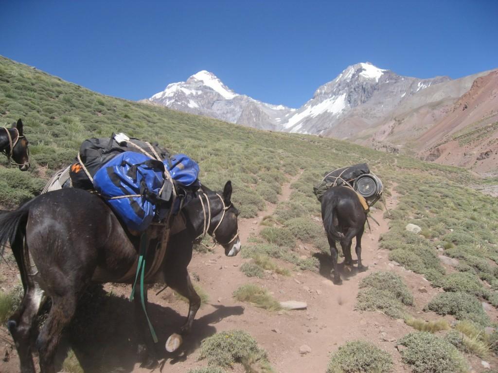 mulas de carga en el aconcagua